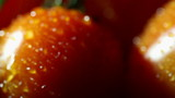 Tomatoes with water drops. Slider macro shot
