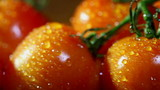 Water drops on tomatoes. Slider macro shot