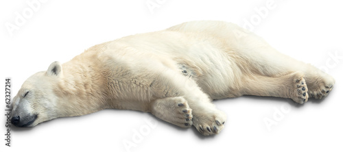 Papiers peints Ours Blanc one polar bear