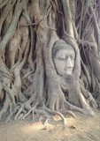 head of image buddha in a tree