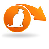 chat sur bouton orange
