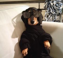 sochshund relaxing