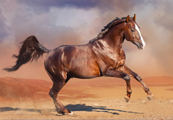 horse running in the desert