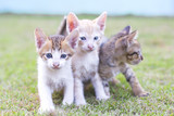 adorable meowing tabby kitten outdoors poster