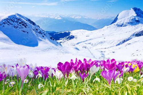 Tuinposter Krokussen Frühling im Gebirge