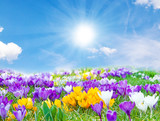 Fototapety Der Frühling kommt