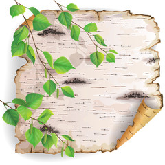 Piece of birch bark
