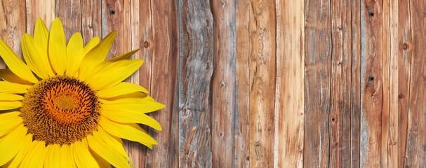 Sonnenblume auf Holz
