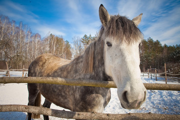 beautiful horse in winter