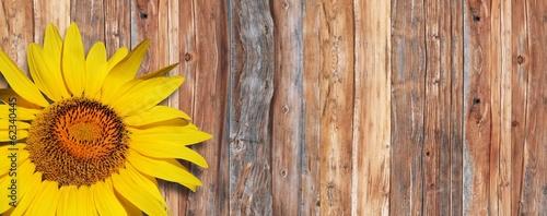 canvas print picture Sonnenblume auf Holz