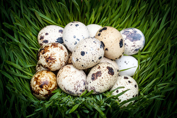Spotted quail eggs