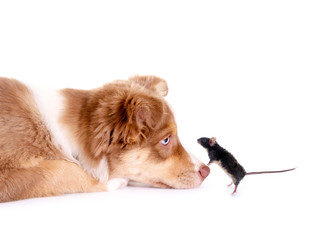Hund und Maus
