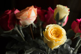 Many colors of roses in black background