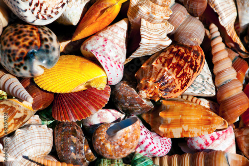 These colorful sea shells are so beautiful