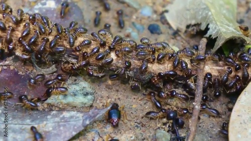 group of termites life