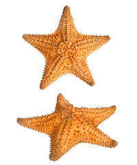 two views of star fish isolated on white