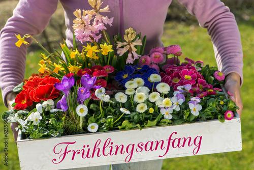 Staande foto Pansies Frühlingsbote
