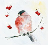 Frozen red bird Bullfinch and rowan berries