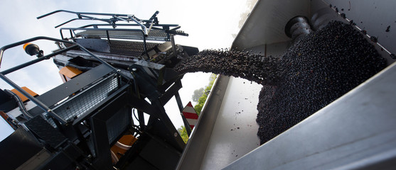Harvesting machine pouring grapes into a trailer