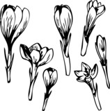 Set of line drawing flowers