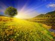 Leinwanddruck Bild - summer landscape