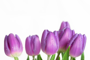 Rand aus schönen feuchten lila Frühlingstulpen
