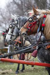 Beauty horses