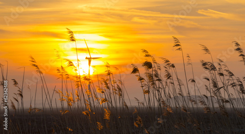 Staande foto Weide, Moeras Sunrise over reed in a field in winter