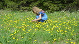 Woman gather yellow dandelion sowthistle flowers in meadow