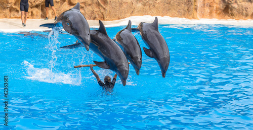 Foto op Plexiglas Dolfijn Four dolphins jumping over a stick during a park show
