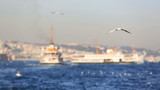 flock seagull with passenger ship at Istanbul city Turkey