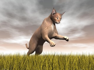 Caracal hunting - 3D render