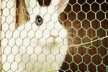 süßer Hase im Käfig