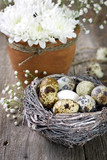 Easter decoration with quail eggs, white chrysanthemum