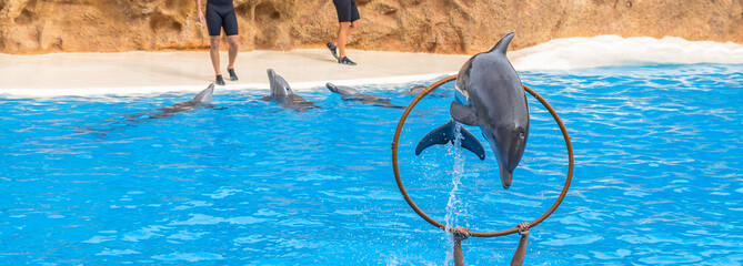 Dolphin jumping through a ring in a park show