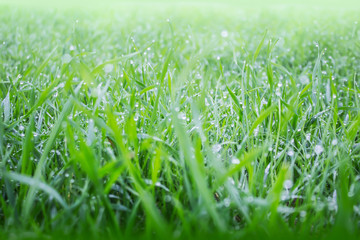 Raindrops on summer grass