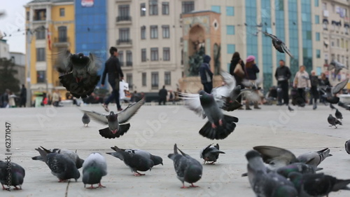 flock pigeon and dove with busy pedestrian walking