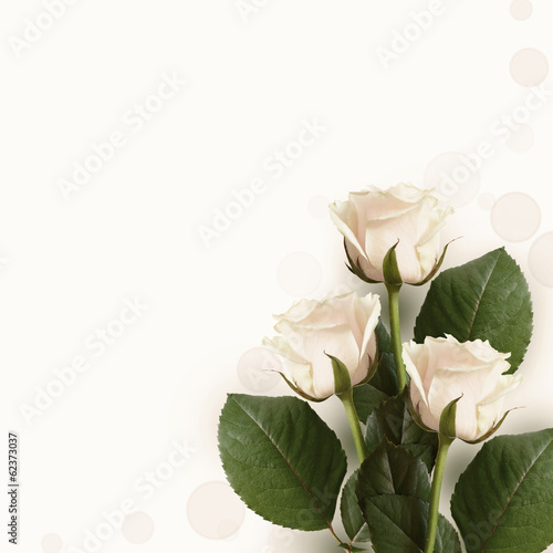Roses on pink background