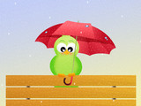 bird in the rain