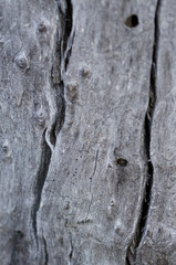 Nature Abstract – Naturally Weathered Wood
