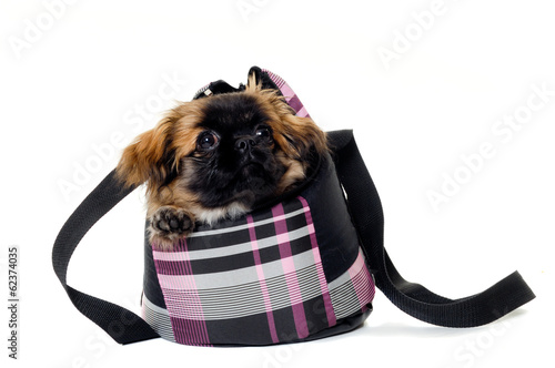Puppy dog in bag