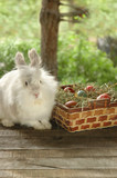 Bunny near basket with Easter eggs on wooden background