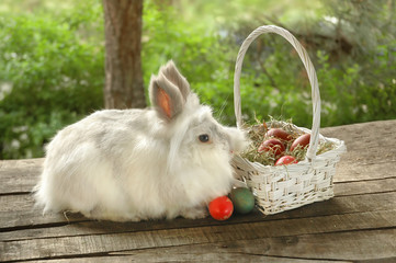 Bunny with Easter eggs in basket on old wooden background