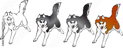 color options husky