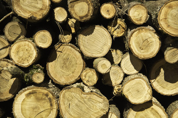 Baum Stapel Querschnitt