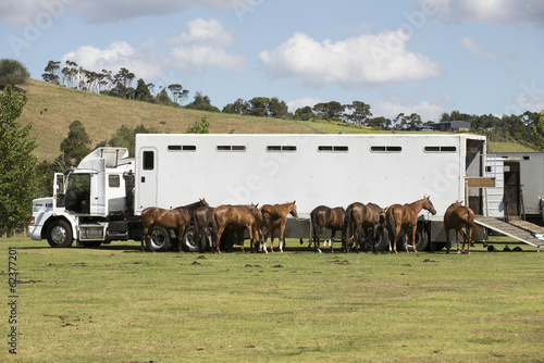 Polo pony transport New Zealand