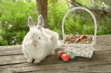 White bunny near basket with Easter eggs