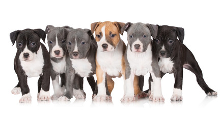 group of puppies together