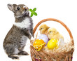 rabbit and basket with easter eggs and chickens