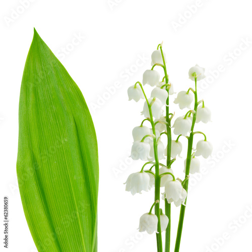 Poster Lelietje van dalen flowers and leaves of lilly of the valley